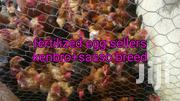 Month Old Chicks | Other Animals for sale in Kiambu, Limuru Central