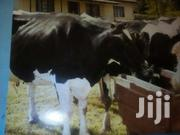 Agriculture | Farming & Veterinary CVs for sale in Kitui, Athi