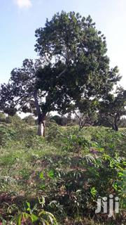 110 Acres At Diani Lunga Road..Mwangada | Land & Plots For Sale for sale in Kwale, Kinondo