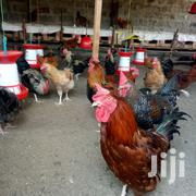 Roosters For Sale | Livestock & Poultry for sale in Kiambu, Juja