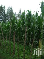 Land 16 Acres In Kipsingori | Land & Plots For Sale for sale in Trans-Nzoia, Kaplamai