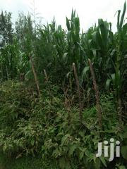 Land 2acres In Motosiet With Ready Title Deed | Land & Plots For Sale for sale in Trans-Nzoia, Motosiet