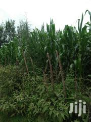 Land 4 Acres In Kaplamai | Land & Plots For Sale for sale in Trans-Nzoia, Motosiet