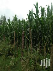 Land 22 Acres With Ready Title Deed | Land & Plots For Sale for sale in Trans-Nzoia, Saboti