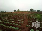 One And Half Acre For Sale In Kirinyaga Nyangati   Land & Plots For Sale for sale in Kirinyaga, Nyangati
