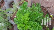 Organicaly Grown Fresh Herbs | Vitamins & Supplements for sale in Kajiado, Ongata Rongai