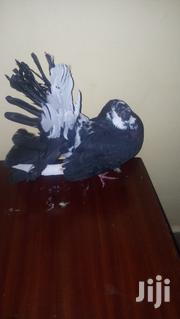 Fantail Pigeons | Birds for sale in Nairobi, Ruai