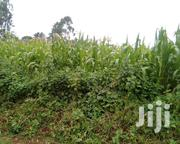Maize For Silage | Feeds, Supplements & Seeds for sale in Nyeri, Gatarakwa