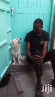 Puppies Dog | Dogs & Puppies for sale in Nairobi, Kariobangi South