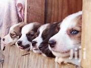 Adorable Mixed Puppies | Dogs & Puppies for sale in Kajiado, Kitengela