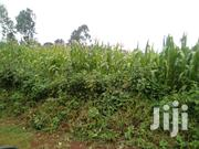 Sillage Maize | Feeds, Supplements & Seeds for sale in Nyeri, Gatarakwa