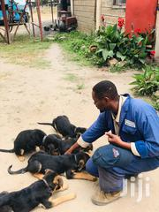 Dogs And Training | Dogs & Puppies for sale in Nairobi, Embakasi