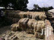 Rhodes Hay Sale | Feeds, Supplements & Seeds for sale in Nyeri, Mweiga