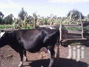 Fresian Cow | Other Animals for sale in Kiambu, Kinale