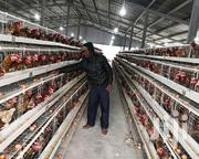 128 Chicken/Birds Cages | Livestock & Poultry for sale in Nairobi, Nairobi Central