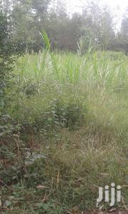 Wambugu Farm - Nyeri 1/4 Acre | Land & Plots For Sale for sale in Nyeri, Gatitu/Muruguru