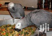 African Grey Parrot | Birds for sale in Baringo, Lembus Kwen