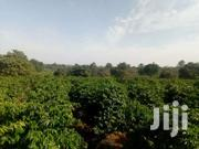 Land for Sale | Land & Plots For Sale for sale in Kiambu, Kiamwangi