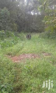 Kigogo-Ini-Tetu, Nyeri 4 Acres | Land & Plots For Sale for sale in Nyeri, Kamakwa/Mukaro