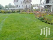 Arabic Grass | Landscaping & Gardening Services for sale in Nairobi, Kilimani