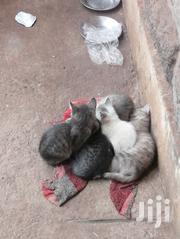 Free Kittens To Be Loved | Cats & Kittens for sale in Nairobi, Kasarani