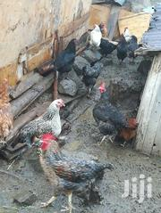 Kienyeji Chiken For Sale | Birds for sale in Nakuru, Viwandani (Naivasha)