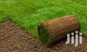 Instant Roll On Fresh Lawn Grass,Kikuyu,Buffalo | Building & Trades Services for sale in Nairobi, Nairobi Central