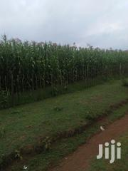 Land One Acre In Kibomet With Title Deed | Land & Plots For Sale for sale in Trans-Nzoia, Kaplamai