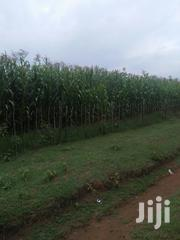 Land 4 Acres With Ready Title Deed | Land & Plots For Sale for sale in Trans-Nzoia, Kaplamai