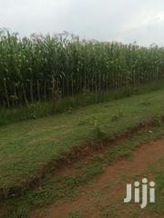Land 5 Acres In Kolokolo | Land & Plots For Sale for sale in Trans-Nzoia, Kwanza