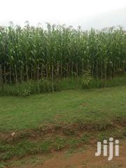 Land 60 Acres In Soy | Land & Plots For Sale for sale in Uasin Gishu, Soy