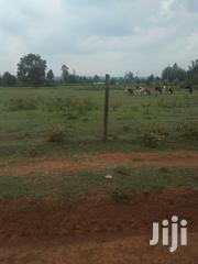 Land 8 Acres With Ready | Land & Plots For Sale for sale in Trans-Nzoia, Kaplamai