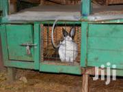 Automatic Rabbit Nipple Drinkers | Farm Machinery & Equipment for sale in Nairobi, Nairobi Central