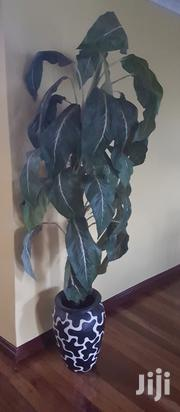 Artificial Plant | Home Accessories for sale in Nairobi, Karen