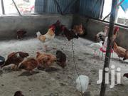 Mature Improved Kienyeji Chicken | Livestock & Poultry for sale in Kitui, Township