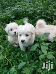 House Dog Small | Dogs & Puppies for sale in Kiambu, Ndenderu