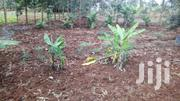 1/2 Acre Plot For Sale In Kabati Area | Land & Plots For Sale for sale in Murang'a, Kagundu-Ini
