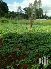 Kansera/Thoro | Feeds, Supplements & Seeds for sale in Kiambu, Limuru Central