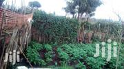 Located Opposite Green Hotel 100meter From Main Road | Land & Plots For Sale for sale in Nakuru, Molo