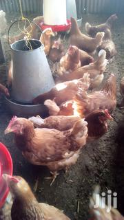 Kienyeji Chickens | Livestock & Poultry for sale in Nairobi, Nairobi Central