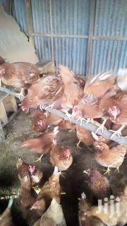 Layers Chickens | Livestock & Poultry for sale in Nairobi, Nairobi Central