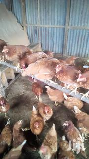 Kuku Kienyeji | Livestock & Poultry for sale in Nairobi, Nairobi Central