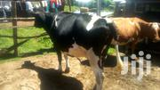 Quality Sec Calfer | Livestock & Poultry for sale in Nakuru, Bahati