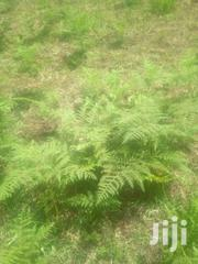3acres In Mukurweini Nyeri County | Land & Plots For Sale for sale in Nyeri, Ruring'U