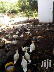 Ducks For Sale | Other Animals for sale in Mombasa, Mkomani