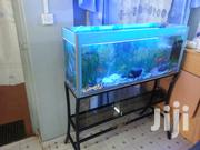 Fresh Water Aquariums | Fish for sale in Kiambu, Hospital (Thika)