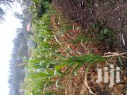 1/4 Acre in Kiserian on Sale | Land & Plots For Sale for sale in Kajiado, Ngong