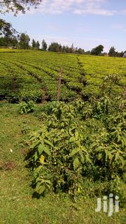 1.5acres for Sale | Land & Plots For Sale for sale in Kericho, Litein