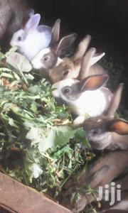 Rabbits For Sale | Other Animals for sale in Nairobi, Karen