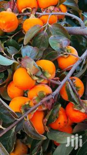 Persimmon Kaki Seedlings | Feeds, Supplements & Seeds for sale in Nairobi, Kileleshwa